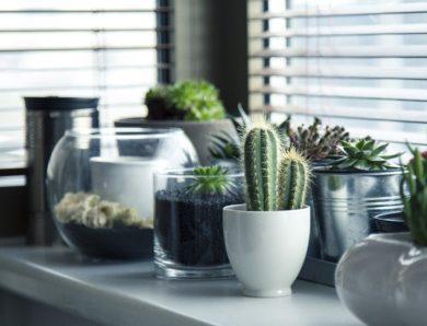 Kies voor planten in je huis