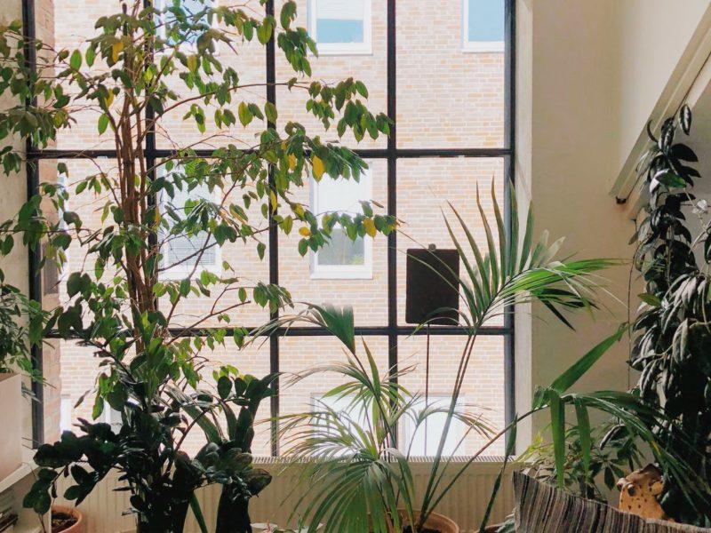De beste tips en ideeën om je huis in te richten met bloemen